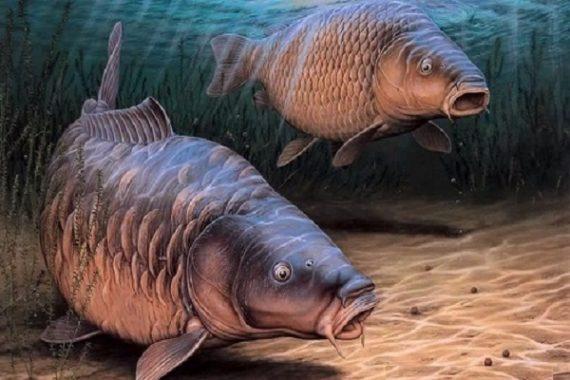 Mơ thấy cá đánh lô đề con gì dễ trúng – Giải mã giấc mơ thấy cá