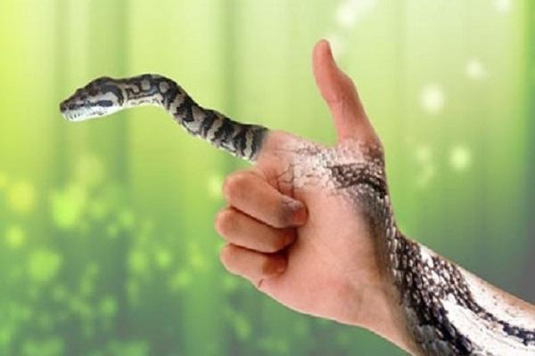 Ý nghĩa của những giấc mơ thấy rắn