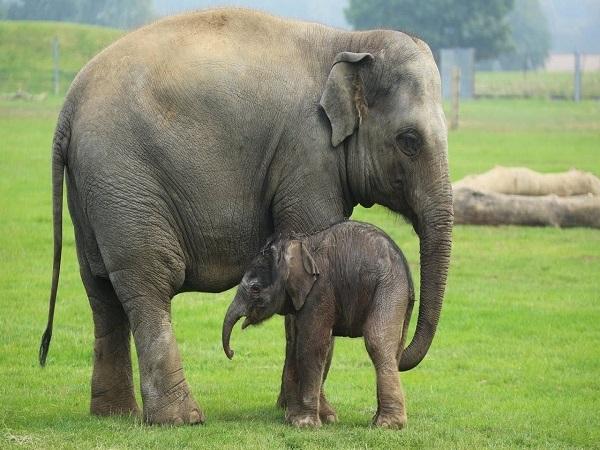 Tổng hợp ý nghĩa giấc mơ thấy con voi