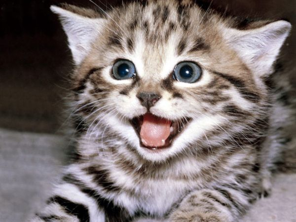 Mơ thấy mèo cắn - Nằm mơ bị mèo cắn đánh xổ số con gì chuẩn xác
