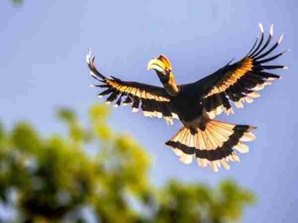 Việc mơ thấy chim có ý nghĩa gì, nên đánh số nào?