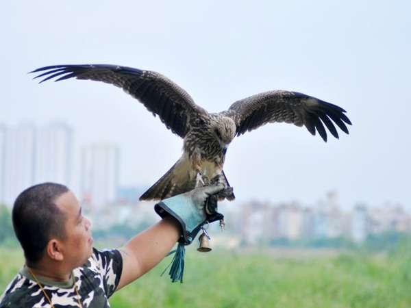 Khám phá ý nghĩa của giấc mơ thấy chim ưng