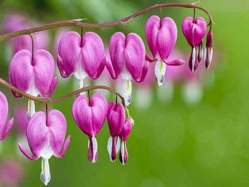 Mơ thấy hoa – Khám phá ý nghĩa chi tiết của giấc mơ thấy hoa