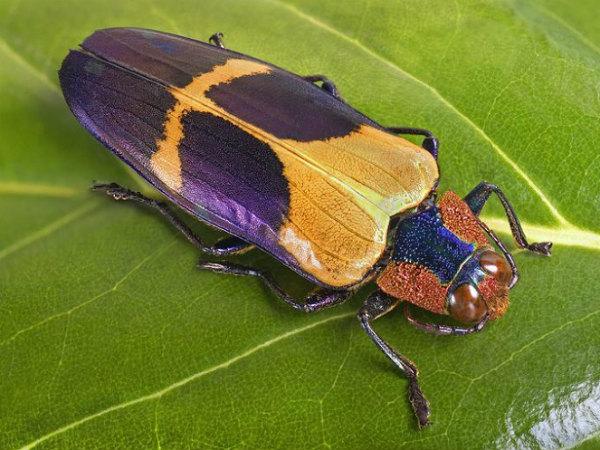 Giải mã chi tiết ý nghĩa giấc mơ thấy côn trùng