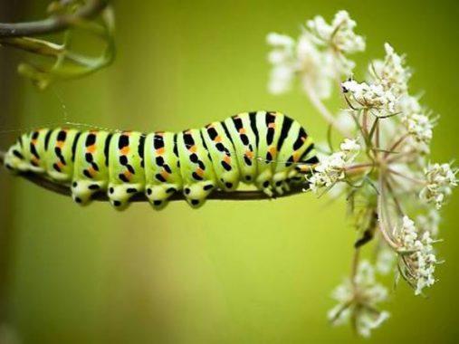 Mơ thấy sâu bọ là điềm gì, đánh con đề nào chắc ăn nhất?