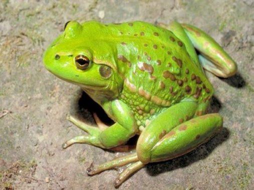 Năm mơ thấy ếch đánh con gì? Ý nghĩa giấc mơ thấy con ếch