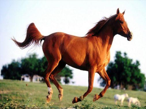 Nằm mơ thấy con ngựa chơi xổ số con gì dễ trúng?