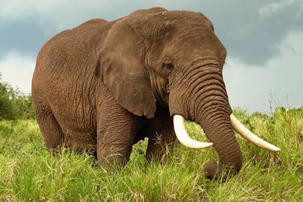 Nằm mơ thấy con voi đánh con gì chắc ăn nhất?