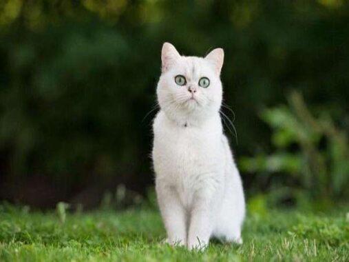 Nằm mơ thấy mèo trắng đánh số mấy? Là điềm hên hay xui ?