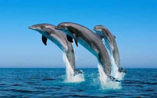 Mơ thấy cá heo là đánh con gì? Ý nghĩa điềm báo giấc mơ